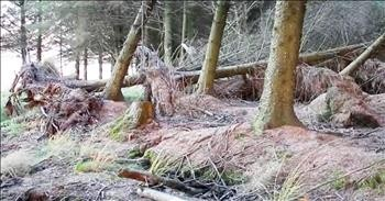 Heavy Winds Move Tree Roots And Create Optical Illusion