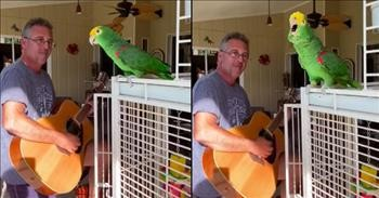 Talented Parrot Sings Along As Human Plays The Guitar