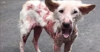 After Living On The Street, Sick Dog Transforms Into Loving Puppy