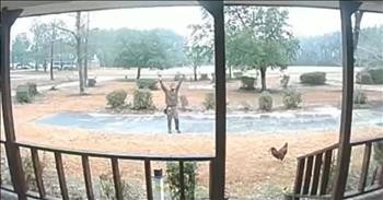 UPS Driver And Rooster Have Hilarious Standoff In Driveway