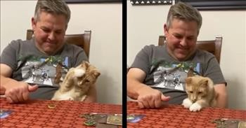 Cat Is Stunned When Owner Spins A Coin