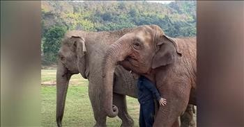 Jealous Elephant Doesn't Want To Share His Human