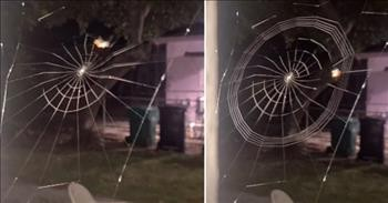 Mesmerizing Timelapse Of A Spider Spinning A Web