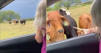 Little Girl Adorably Calls The Cows Home