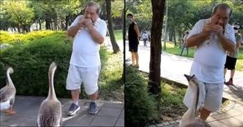 Man Plays Harmonica And The Geese Come Running