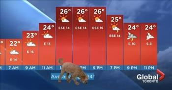 Unlikely 'Storm' Interrupts Weatherman's Live TV Report