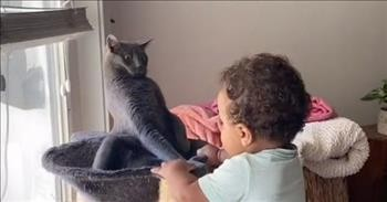 Cat Meets A Toddler For The First Time And Its Reaction Is Priceless