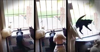 Cats Watching A Bird Get A Surprise From The Family Dog Comedy Videos