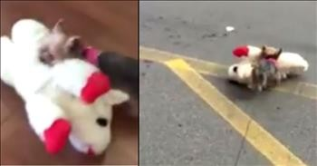 Tiny Fur Baby Gets To Pick Out Her Own Toy And Her Joy Is