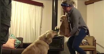 Golden Retriever Surprised With A New Puppy Cute Videos