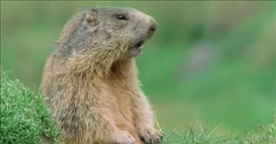 Viral Talking Squirrel Calls For 'Alan'