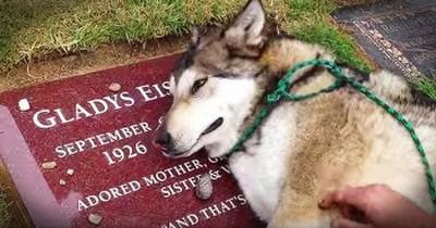 Heartbroken Dog Cries On Owner's Grave