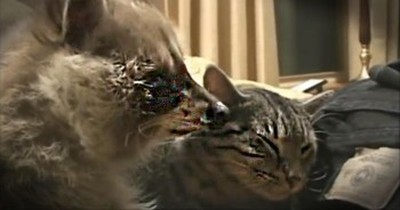 Two Unlikely Animal Best Friends Snuggle Together