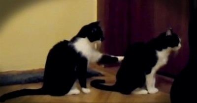 Dramatic Cat Apologizes to His Cat Friend. . .Sort Of!