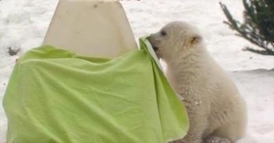 Meet the World's Cutest Polar Bear ;)
