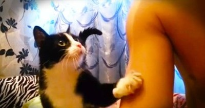 Extremely Polite Cat Just Wants More Snuggles