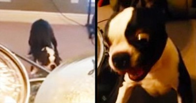 This Pup Didn't Like The Music – So He Ended It In The Most HILARIOUS Way!