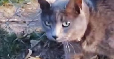 This Cat Has The STRANGEST Meow I've Ever Heard. And Now I Can't Stop Watching!
