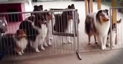 These Patient Pups Have The BEST Manners! This Is 1 You Have To See To Believe!