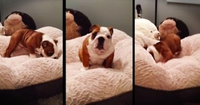 Puppy Has The CUTEST Reaction To New Bed
