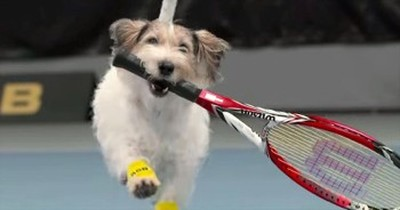 Adorable Puppies Act As Ball Catchers At Tennis Match