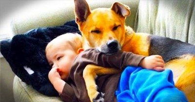 Adorable Dog Watches Over His Little Human Who Doesn't Feel Well