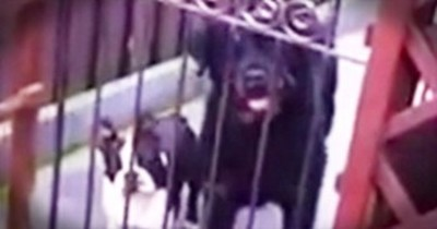 Polite Puppy Barks Adorable 'Hello'