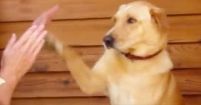 Silly Dog Plays Patty-Cake With Her Human