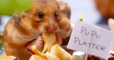 Tiny Hamster Celebrates Summer Time