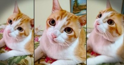 Precious Kitty Sings Along With Owner