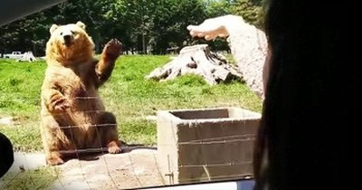 Waving Bear Surprises Everyone With Awesome Catch