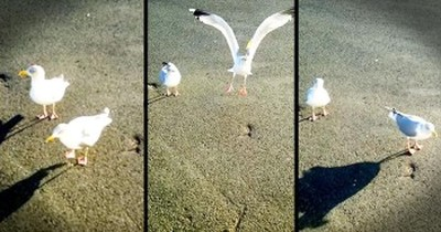 Dancing Seagull Is Guaranteed To Make You Smile