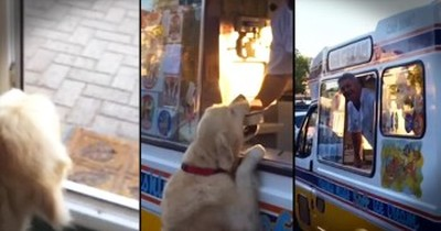 Golden Retriever And His Ice Cream Man Best Friend Will Make Your Day!