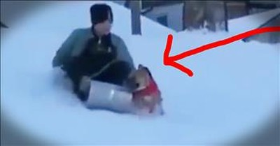 Little Puppy Steals Sled To Play In Snow