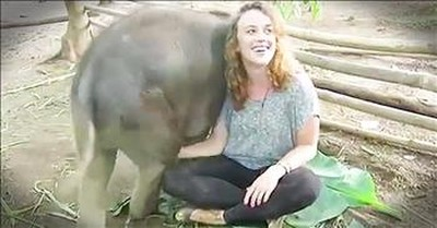 Baby Elephants Love To Sit On Human's Lap