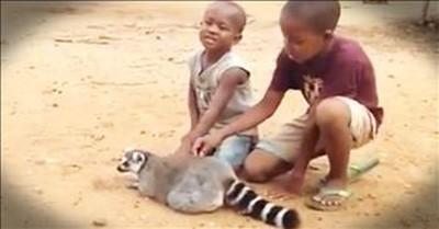 Friendly Lemur Just Wants More Scratches
