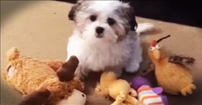 Puppy's Hilarious Best Friend Will Have You LOLing!