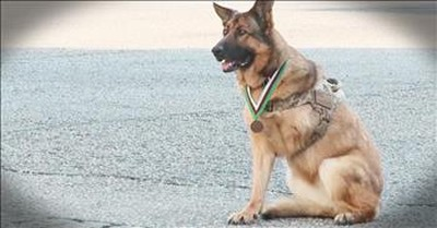6 Dogs That Prove They Are Man's Best Friend