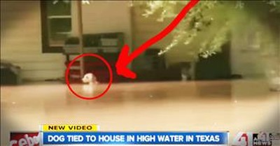 Dog Left Tied Up In A Flood Gets Heart-Dropping Rescue