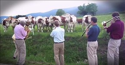 Dairy Cows Have Unbelievable Reaction To Jazz Band