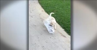 Tiny Puppy's BIG Struggle Wilth The Newspaper Is Too Cute