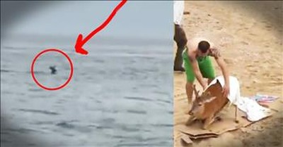 Deer Found 6 MILES Off Shore Get A Nail-biting Rescue