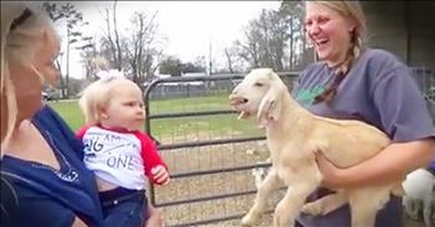 Tiny Goat And Baby Copy Each Other