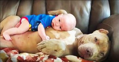 Pit Bull Snuggles With Precious Baby