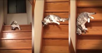 Slinky Cat Goes Down The Stairs