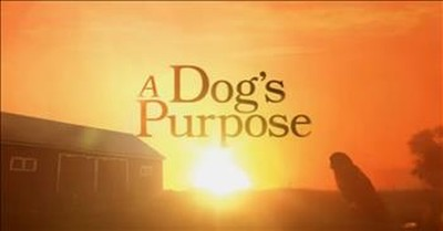 This Trailer For 'A Dog's Purpose' Will Have You Laughing and Crying