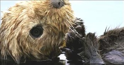 Life-like Otter Spycam Gets Us Up Close To These Amazing Animals