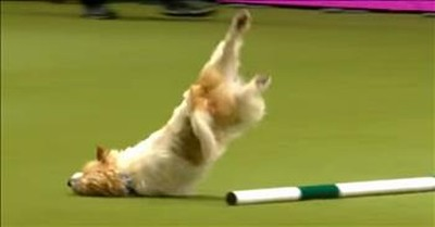 Crazy Show Dog Is The Hit Of The Competition