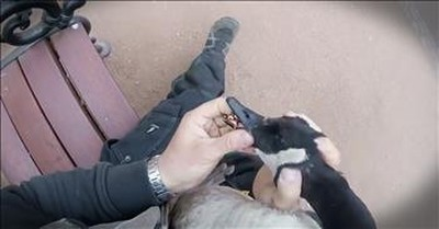 Man Feeds Goose Before It Turned Into Dramatic Rescue