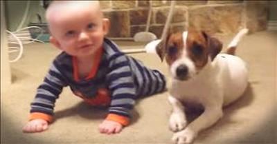 Tiny Dog Teaches Baby How To Crawl